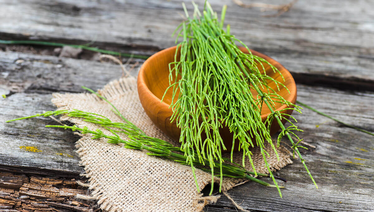 Properties of horsetail for the body - what should you know?