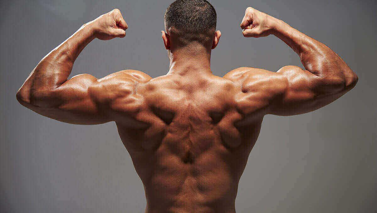 MUSCLES DORSAUX  ENTRAÎNEMENT AVEC UN TRAUMATISME DES MUSCLES DORSAUX